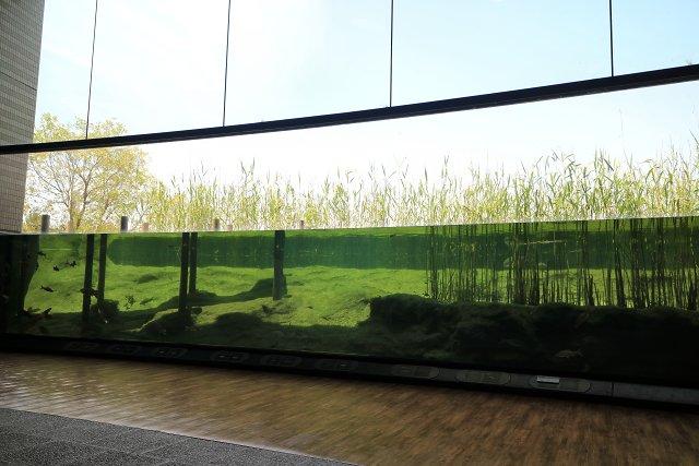 滋賀県立琵琶湖博物館の水槽