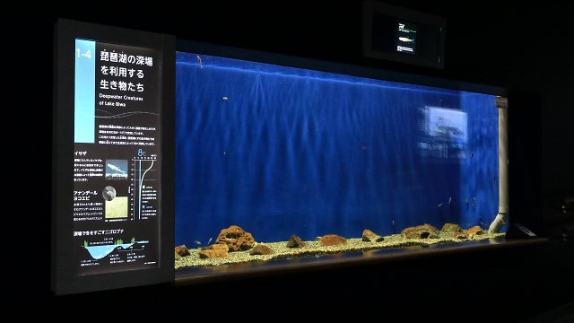 滋賀県立琵琶湖博物館の展示物説明