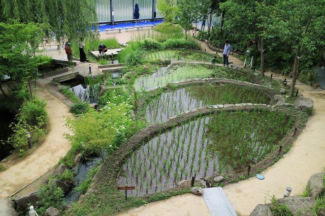 京都水族館の棚田(PLフィルタなし)