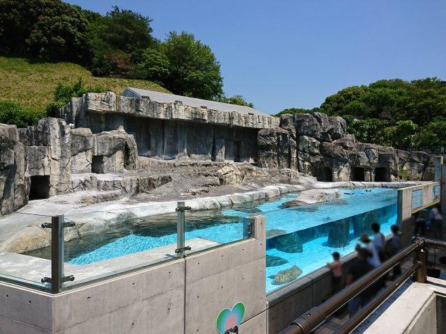 愛媛県立とべ動物園 ペンギン広場