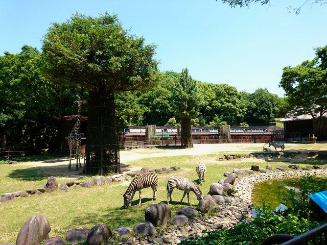 愛媛県立とべ動物園 サバンナ