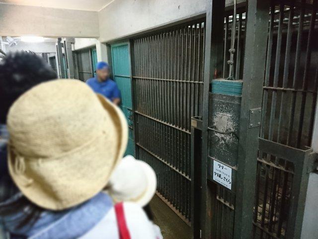 愛媛県とべ動物園 ライオン舎探検