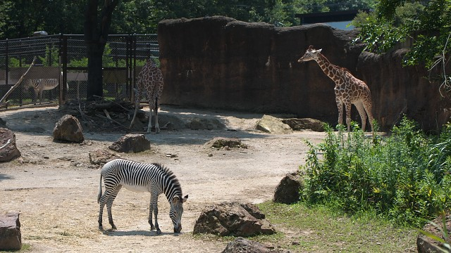いしかわ動物園 アフリカの草原