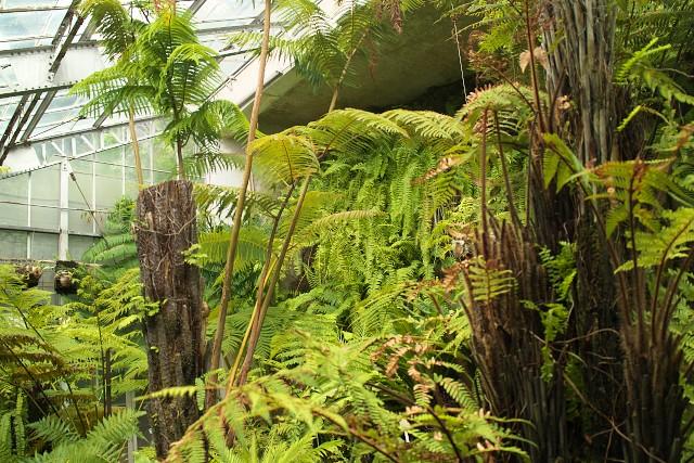 熱川バナナワニ園 シダ温室