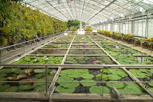 熱川バナナワニ園 熱帯スイレン