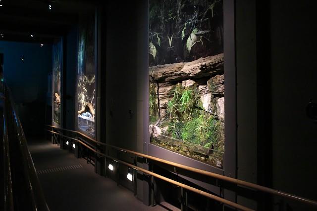 岐阜県世界淡水魚園水族館 館内スロープ