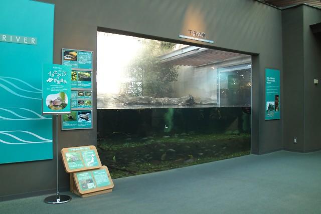 岐阜県世界淡水魚園水族館 長良川下流の魚水槽