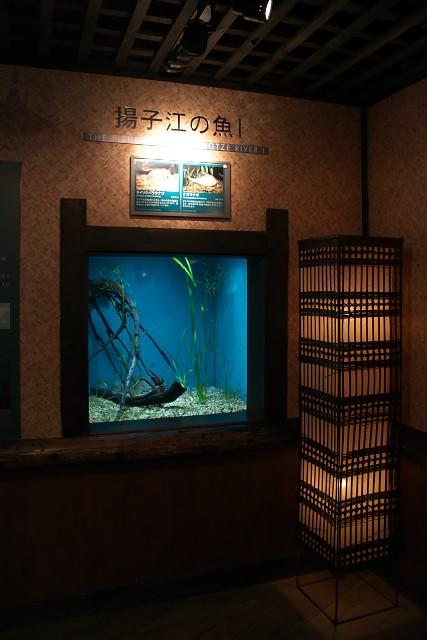 岐阜県世界淡水魚園水族館 揚子江の魚水槽