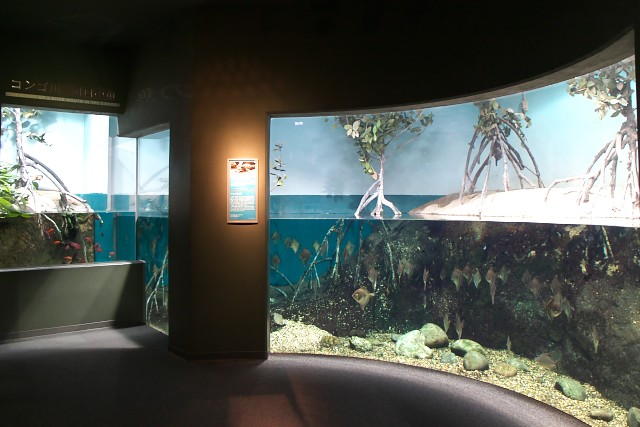 岐阜県世界淡水魚園水族館 コンゴ川河口の魚水槽