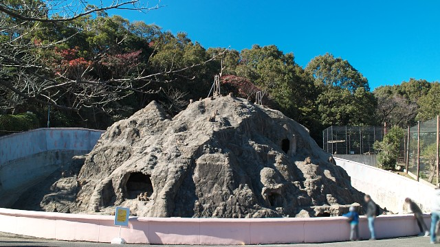 みさき公園 サル山
