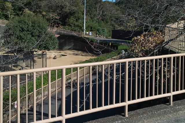 みさき公園 カンガルー放飼場付近