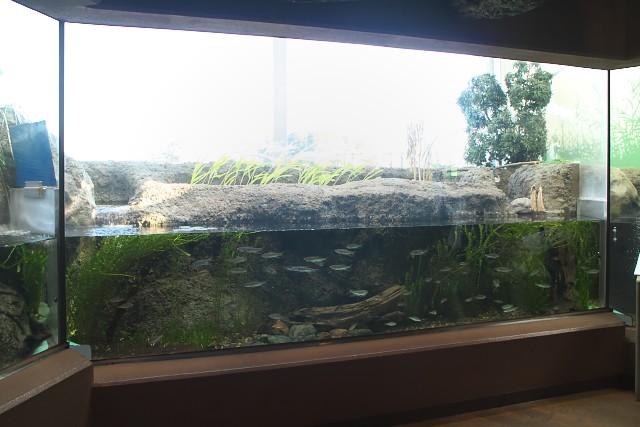 しながわ水族館「東京湾に注ぐ川」