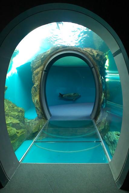 しながわ水族館 アザラシのトンネル水槽