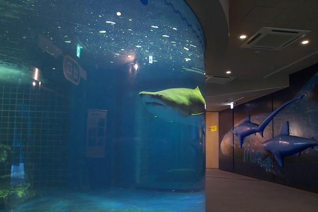 しながわ水族館 シャークホール