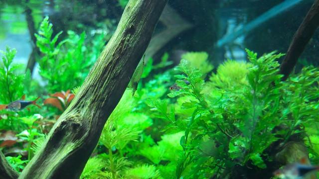 すみだ水族館 自然水景水槽