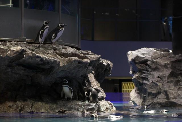 すみだ水族館 ペンギン水槽