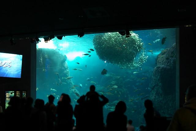 新江ノ島水族館 相模湾大水槽