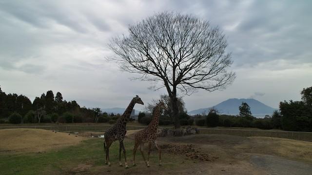 平川動物公園 アフリカの草原ゾーン