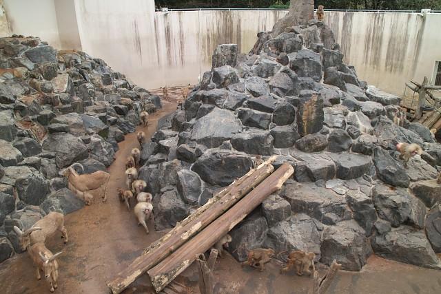 平川動物公園 マントヒヒ&バーバリーシープ舎