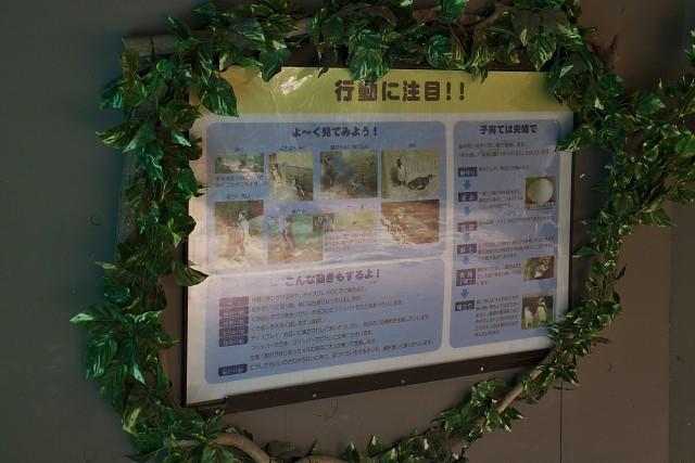 熊本市動植物園 ペンギンの行動についての表示