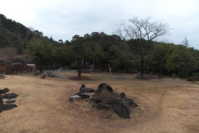 高知県立のいち動物公園 サバンナ