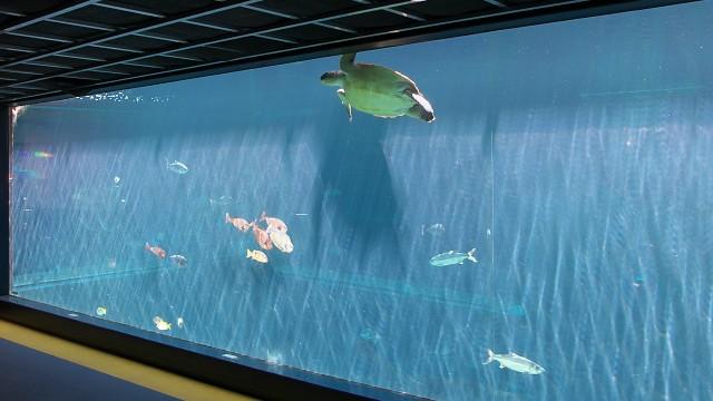 箱根園水族館 魚類大水槽