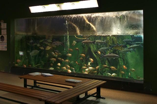 箱根園水族館 淡水館内水槽