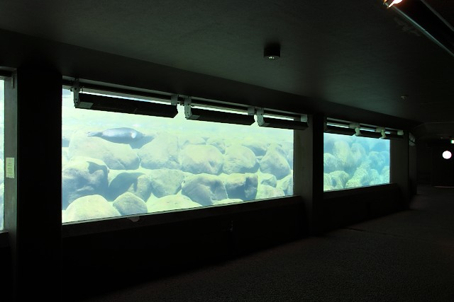 箱根園水族館 バイカルアザラシ広場