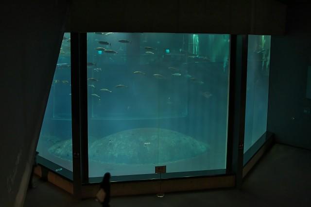 葛西臨海水族園 「大洋の航海者」水槽