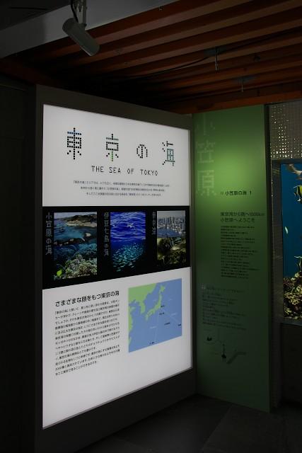 葛西臨海水族園 「東京の海」