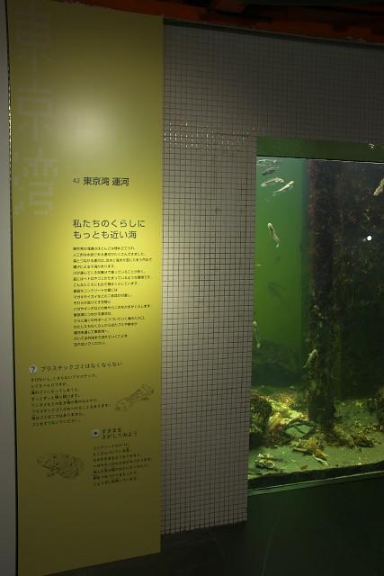 葛西臨海水族園 「東京湾 運河」水槽