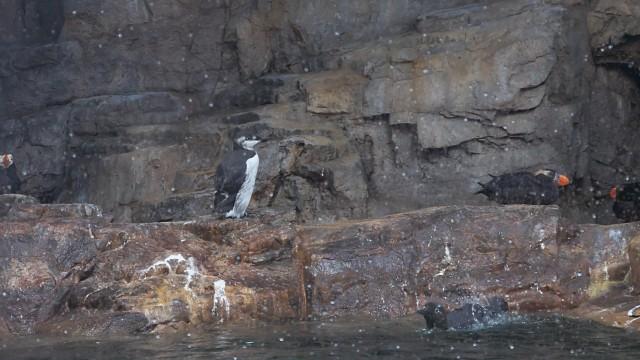 葛西臨海水族園 「海鳥の生態」展示