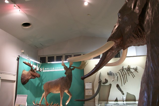 野尻湖ナウマンゾウ博物館 内部