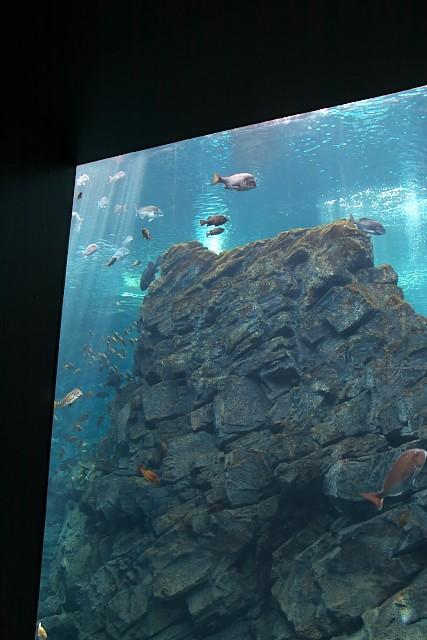 上越市立水族博物館 うみがたり大水槽