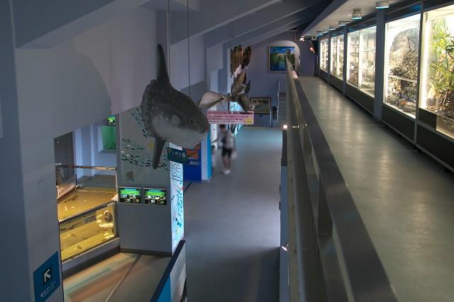 姫路市立水族館 本館