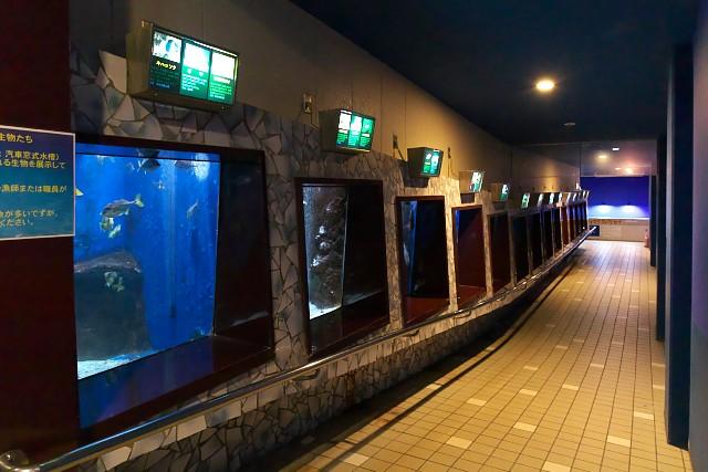 越前松島水族館 おさかな館内部