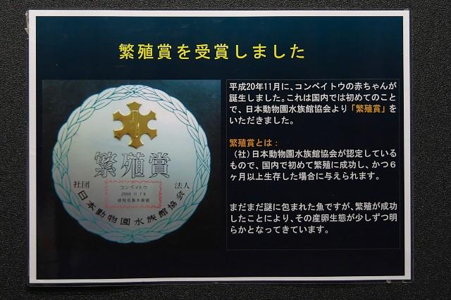 越前松島水族館 「コンペイトウ」繁殖賞受賞の掲出物