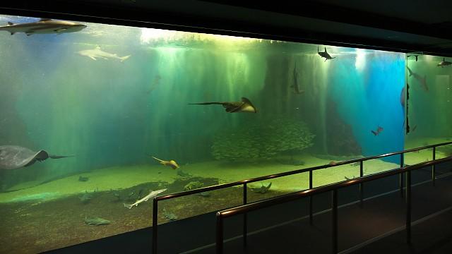 越前松島水族館 海洋大水槽