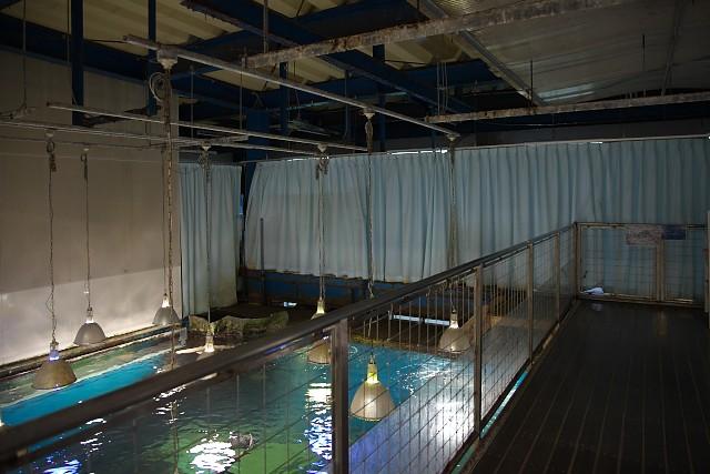 越前松島水族館 海洋大水槽上部