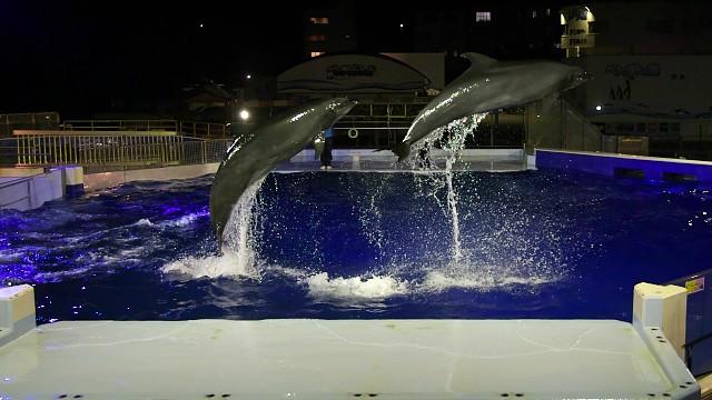 越前松島水族館 イルカショー