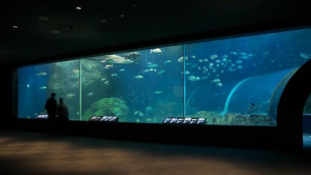新潟市水族館「日本海大水槽」