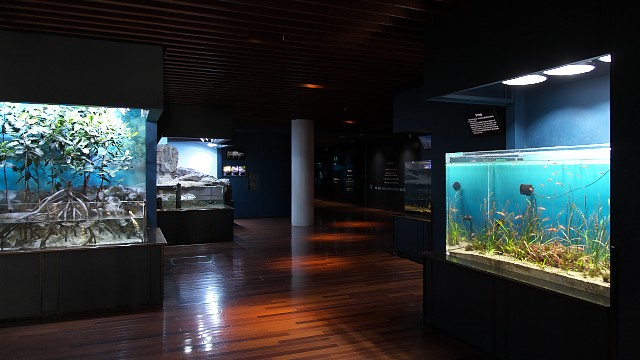 新潟市水族館「潮風の風景」ゾーン