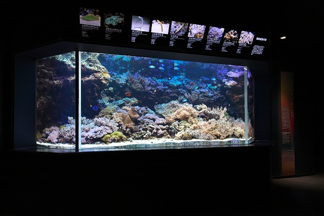 新潟市水族館「南西諸島の海」水槽