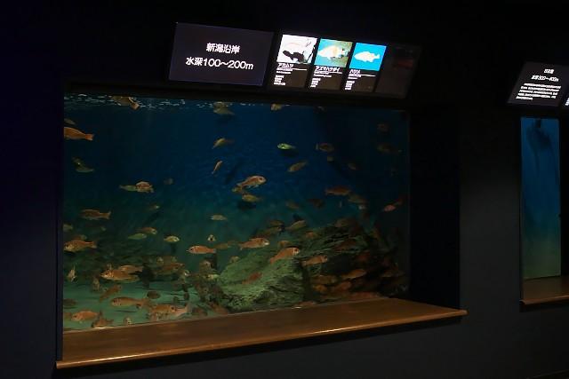 新潟市水族館 水槽