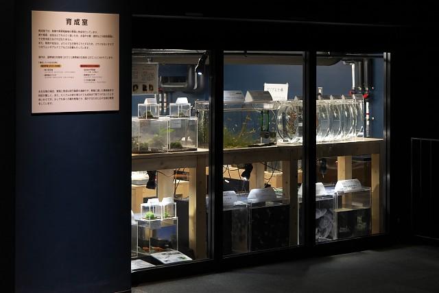 新潟市水族館「育成室」