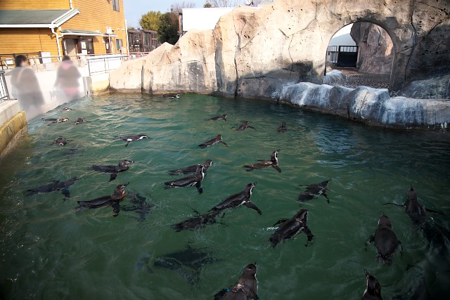 福山市立動物園 ペンギンゾーン