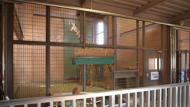 福山市立動物園 キリン寝室