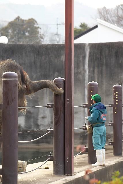 福山市立動物園 ボルネオゾウ運動場