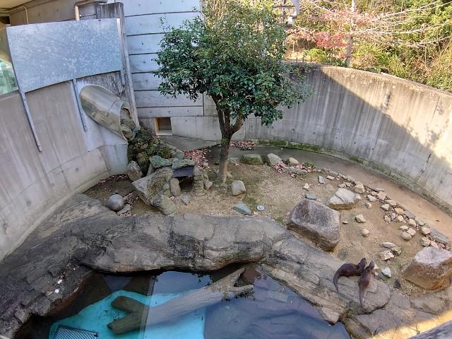 とくしま動物園 コツメカワウソ展示場