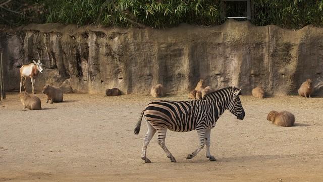 とくしま動物園の「サバンナ」